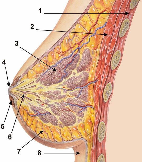 Как увеличить грудь с помощью упражнений!